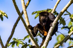 Natureza Biodiversidade Pantanal