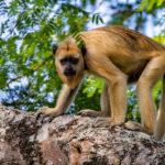 Natureza Pantanal